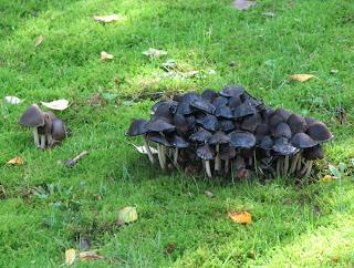 muita sieniä