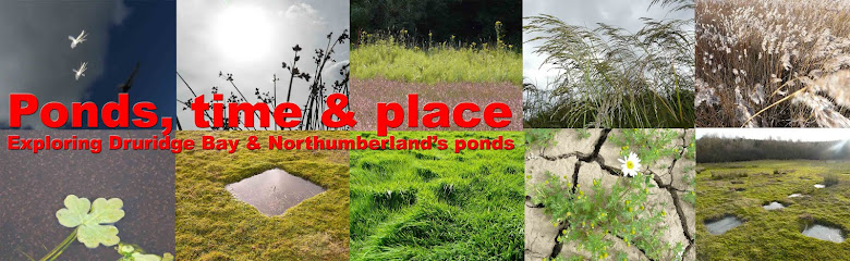 Ponds, time and place. A Druridge Bay Northumberland blog