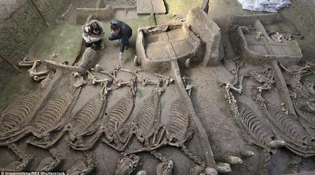 Kerangka Kuda dan Kereta Bangsawan Berusia 2500 Tahun di Temukan di China