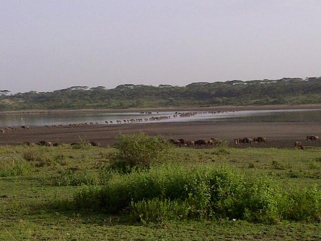 Serengeti Migration is in Tanzania