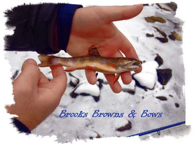 Brooks, Browns, & Bows