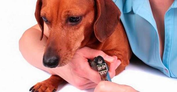 Cuide das unhas do seu pet