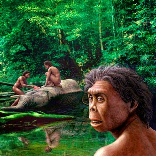 Manusia Flores, Homo Floresiensis