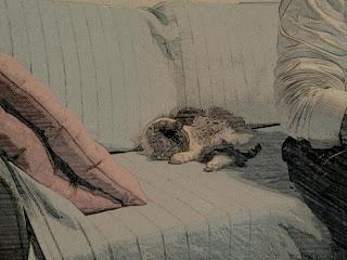 camera paper gata dormida