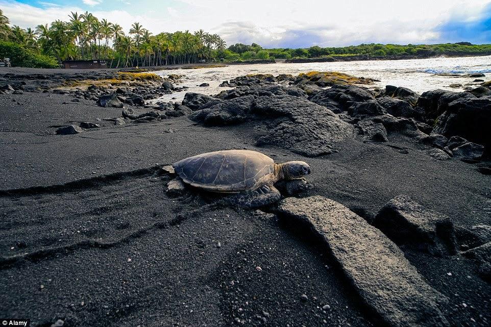 من شواطئ هاواي