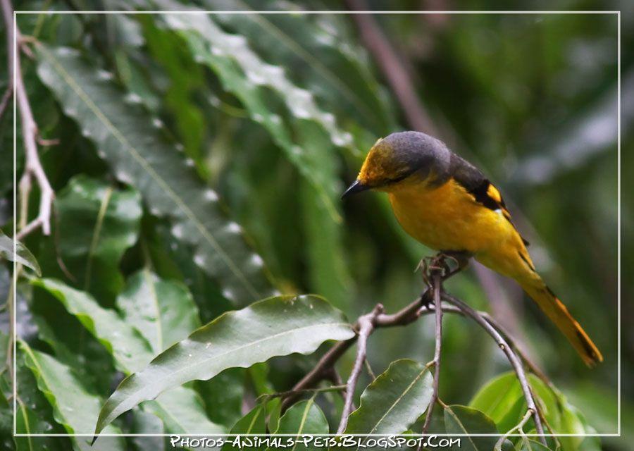http://4.bp.blogspot.com/-PN5qxtdmvbg/Tt-Jzn7oEaI/AAAAAAAAChY/NXhY5XrgO3o/s1600/bird%2Bpicture.jpg