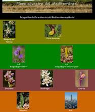 Flora Silvestre del Mediterráneo