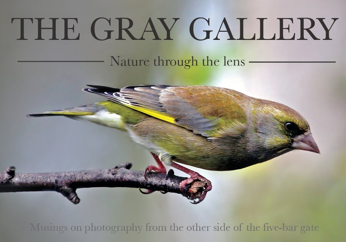 The Gray Gallery / Nature through the lens
