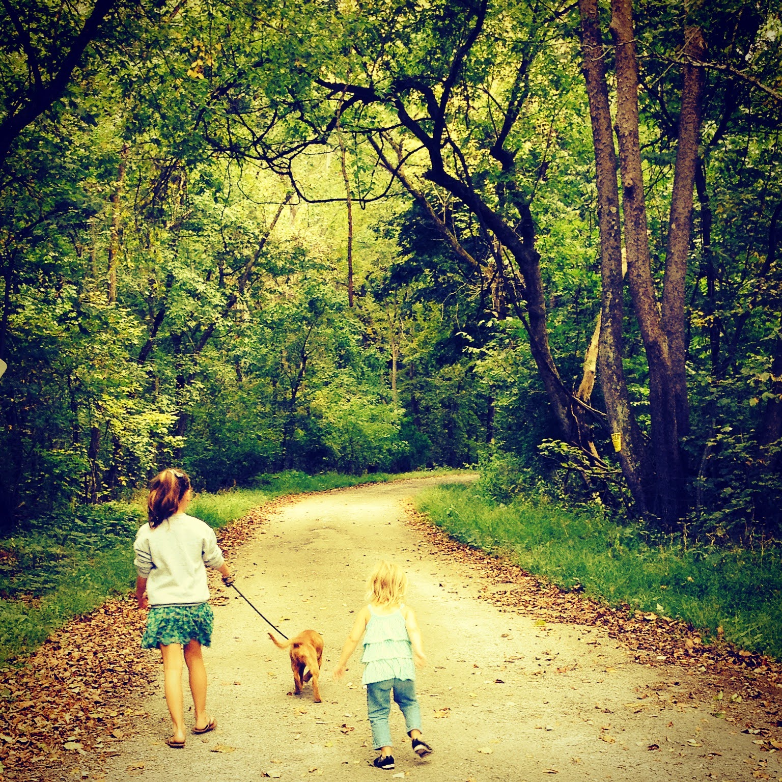 Kids Walking with the Dog in the Country