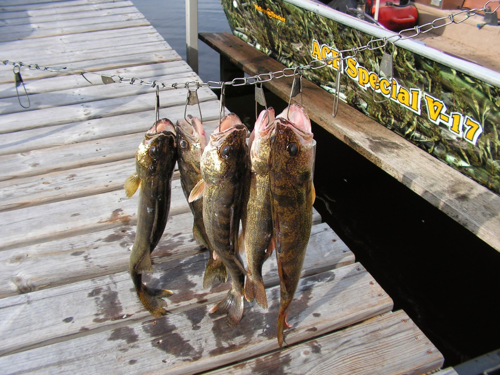 Ace 39 s houghton lake fishing report friday 6 report for Houghton lake fishing report