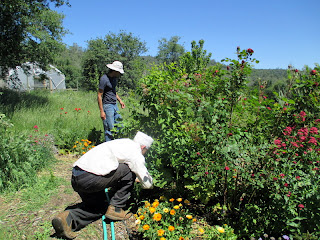 repairing, replacing irrigation for garden beds