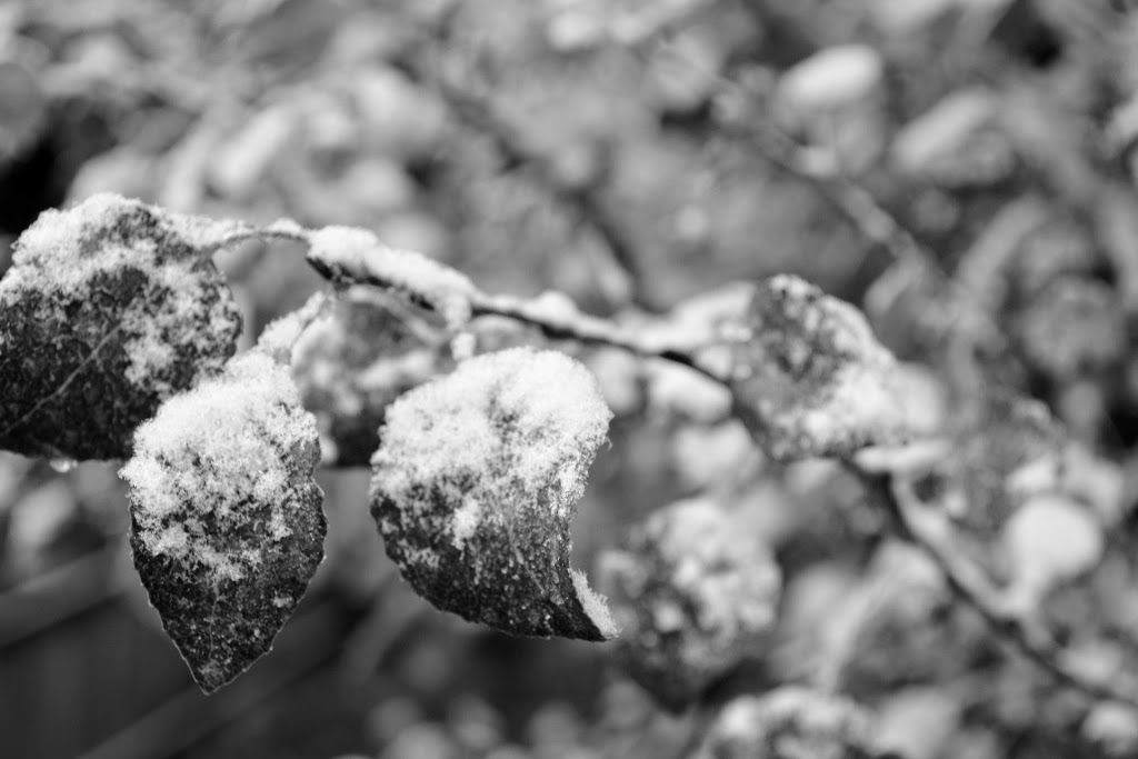 Wordless Wednesday: First Snow, Over The Apple Tree