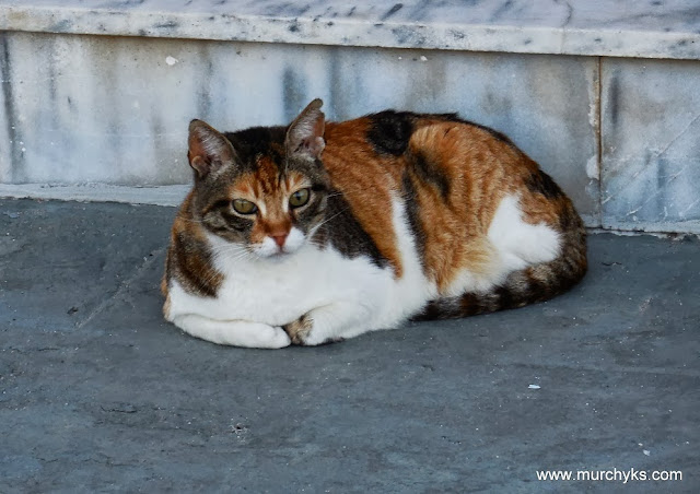 Sweet Cat from Crete
