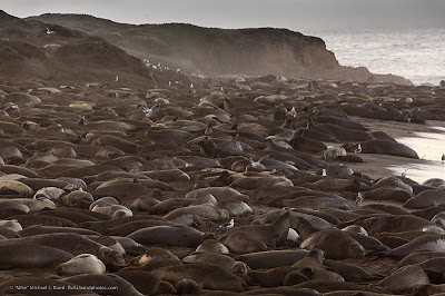Elephant Seal Rookery, San Simeon, California