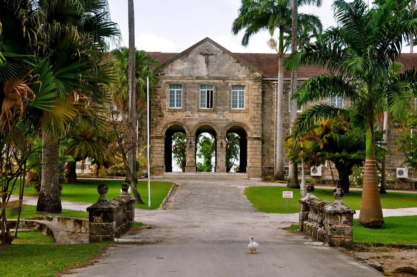 loop barbados off the beaten track codrington college