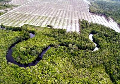 Blocking Area Perkebunan Kelapa Sawit