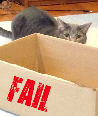 Cat Fail hides behind box