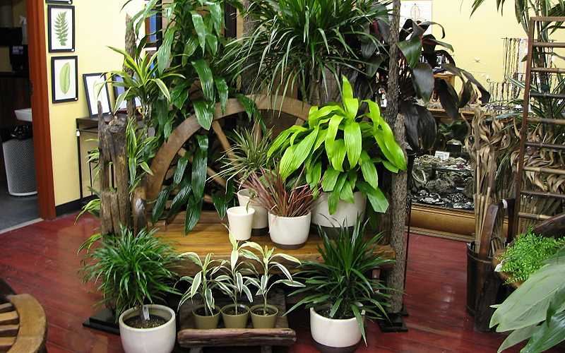 Easy to grow plants houseplants the fancy flora for Best easy indoor plants