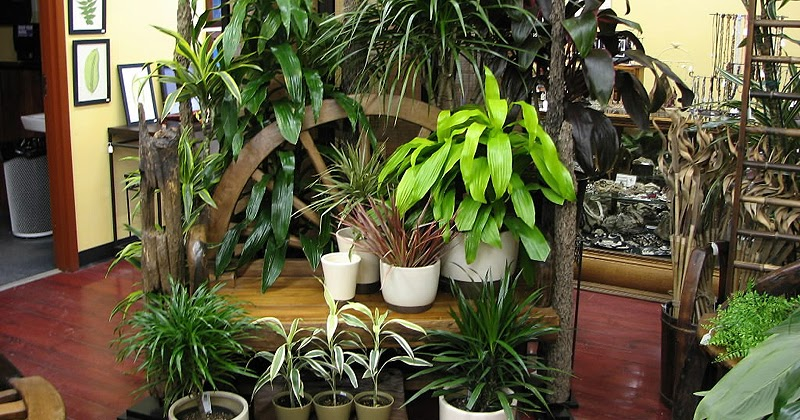 Easy to grow plants houseplants the fancy flora for Small easy to grow plants