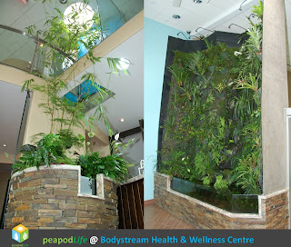 PeapodLife @ Bodystream Health & Wellness Centre in Barrie, Ontario, Photos 2013