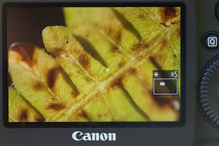 tips memotret makro, focusing