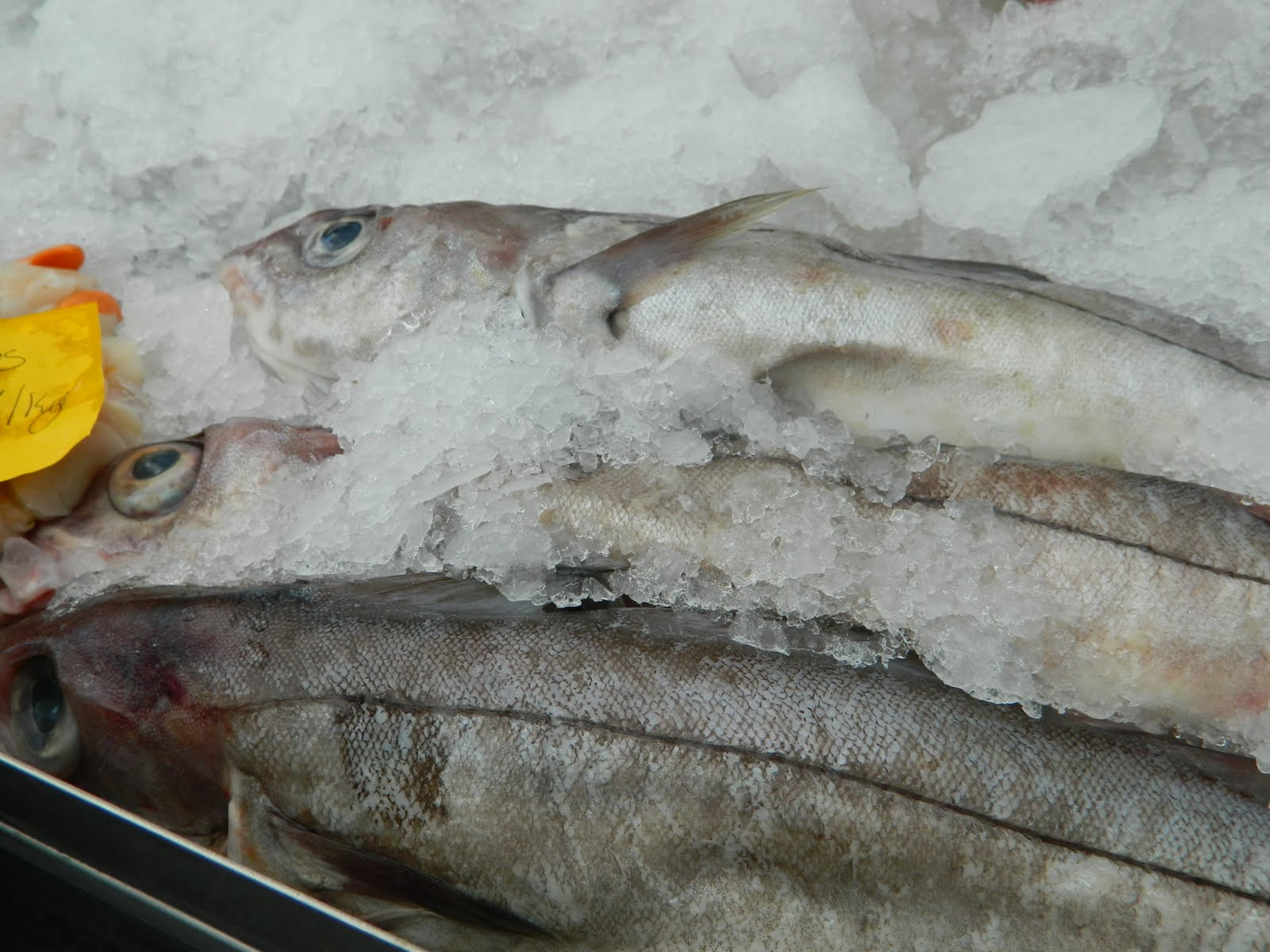 Lemon love notes spiddal market connemara ireland for Saving fish from drowning