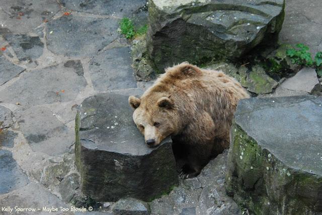 Bears at Cesky Krumlov castle