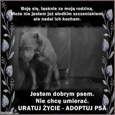 Schronisko dla bezdomnych zwierząt w Jastrzębiu Zdroju.