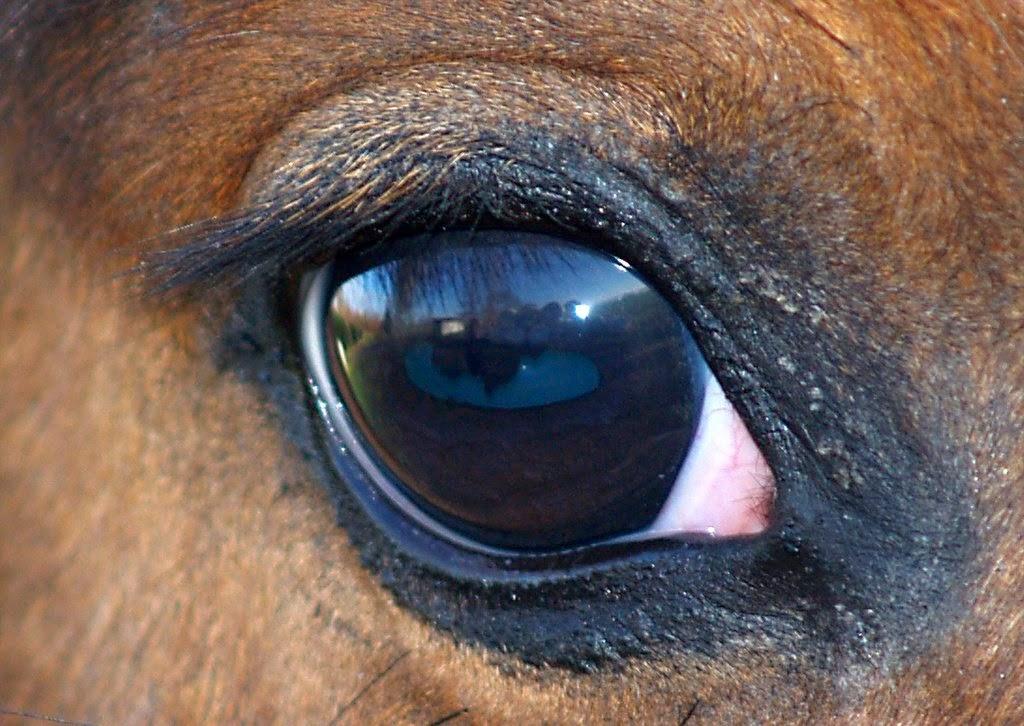 njurproblem häst symptom