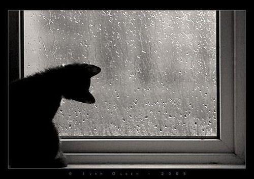 A tempestade é forte e passa em breve, mas a chuva miúda persiste.
