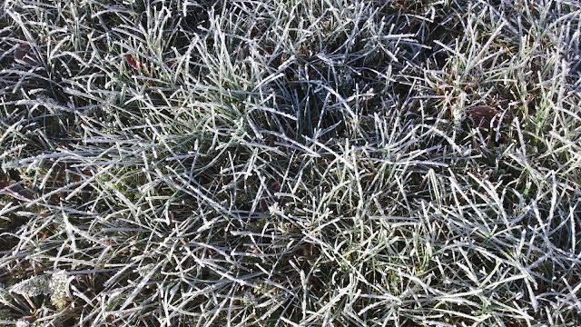 frost, froozen gras