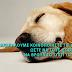 SOS! Έκκληση για βοήθεια από τον Σύλλογο Φίλων Ζώων του Χαλανδρίου...