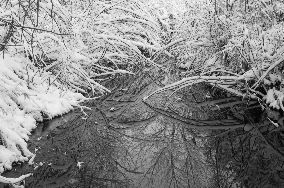 A Tree Falling Denver Botanic Gardens At Chatfield February 2014 Part I