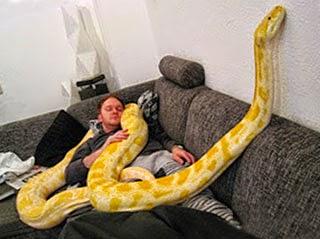 большими попами, видеть во сне змей подопечных Сергея