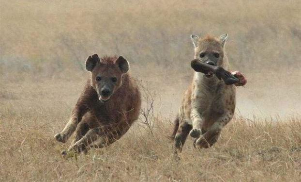 Amazing Animals Jump  Nice Pics glamour images