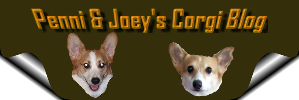 Penni and Joey's Corgi Blog