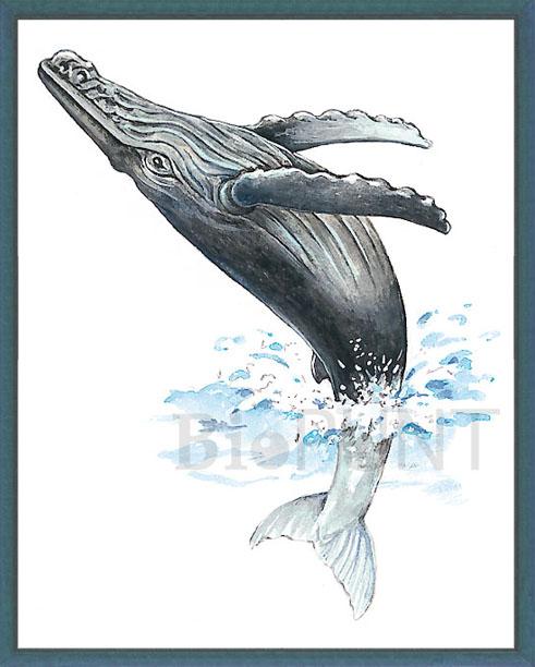 galeria natural & natural gallery: Cetáceos