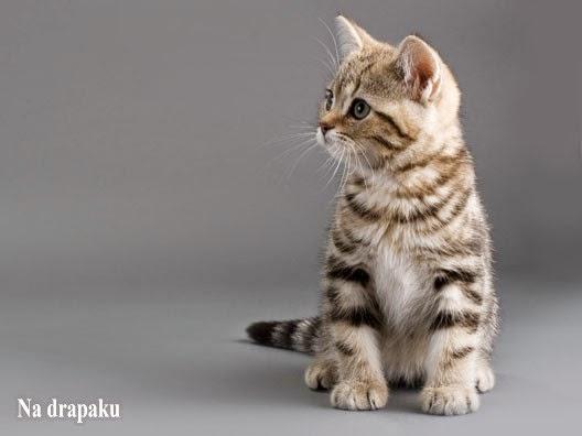 Wyprawka dla kociaka