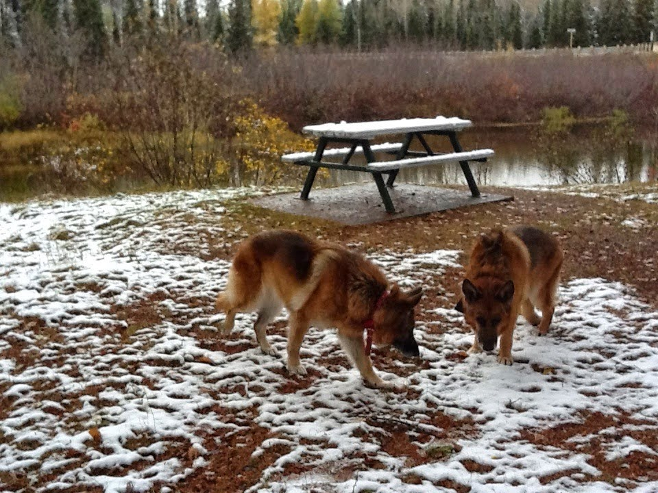 Leben and Erde enjoying the first snow of the year near northern Lake Superior, 2012