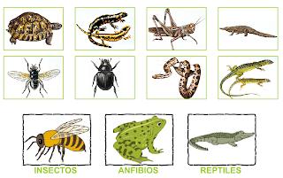 http://primerodecarlos.com/SEGUNDO_PRIMARIA/diciembre/Unidad5/actividades/cono/anfibios_reptiles_insectos.swf