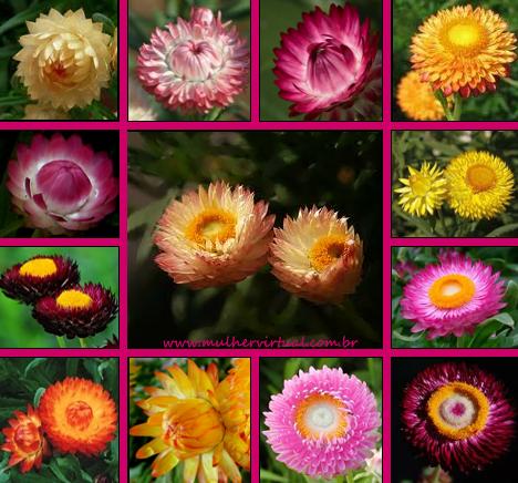 Plants of the Interior with White Flower Lily Garden Nurseries of Plants Eucharis Amazonica Grandiflora - YouTube