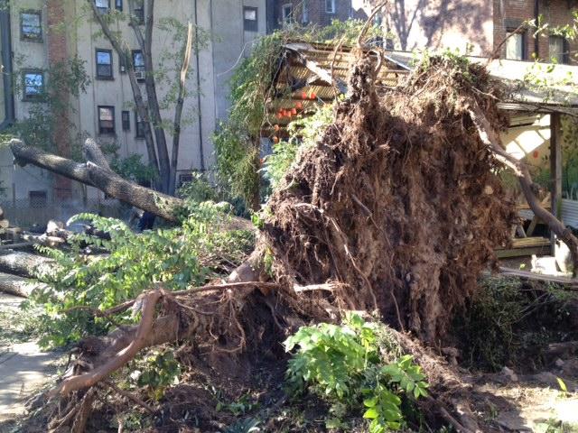 Post Sandy East Village 6b Community Garden Clean Up Schleppy Nabucco 39 S