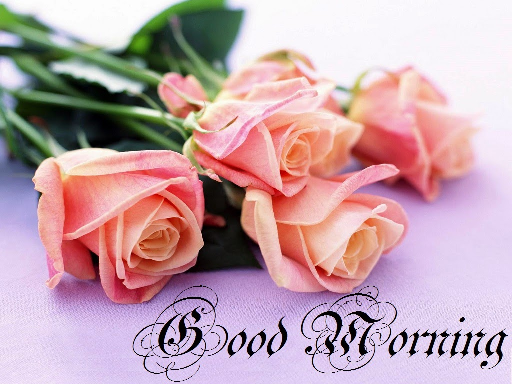 Good Morning Beautiful Pink Roses : Good morning pink roses hd images and pictures festival