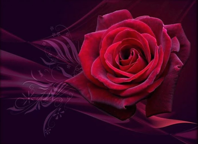Beautiful Red Rose Flowers for PC and Laptop Desktop Backgrounds Online free delivery