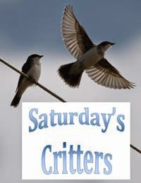 http://viewingnaturewitheileen.blogspot.ca/