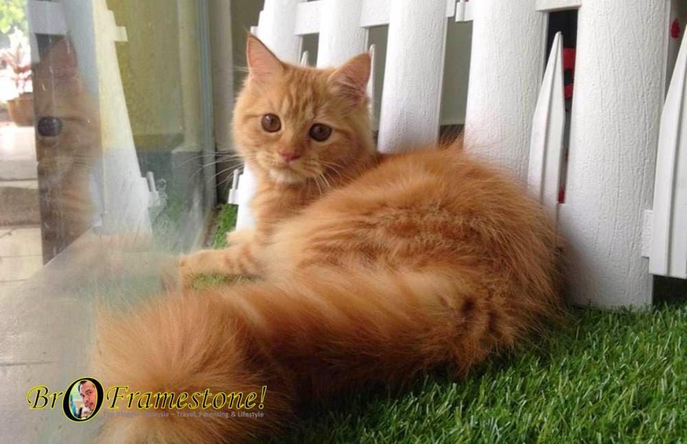 Pencinta Kucing Cathoot