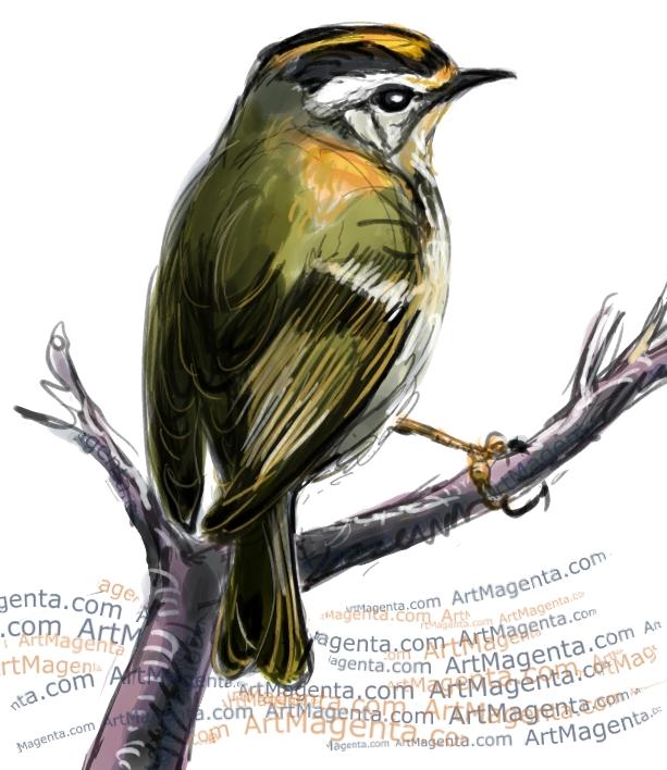 En fågelmålning av en brandkronad kungsfågel från Artmagentas svenska galleri om fåglar
