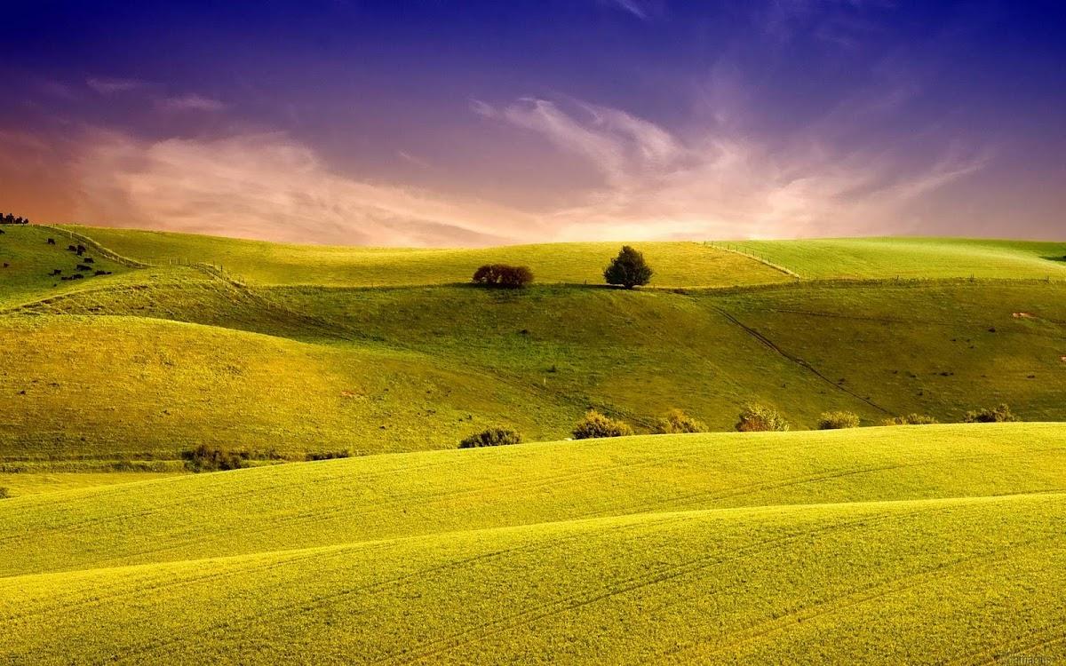 Amazing Field Widescreen HD Wallpaper