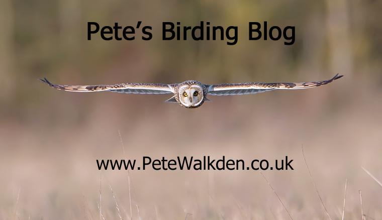 Pete's Birding Blog