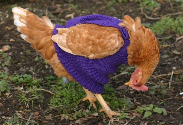 chicken+sweater+2.jpg
